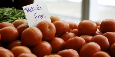 Pesticide free tomatoes / Flickr / heather_on3 / CC BY-NC-ND 2.0